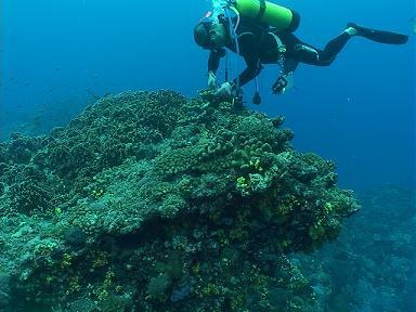 綠島海洋義工;圖片來源:環境影像部落格