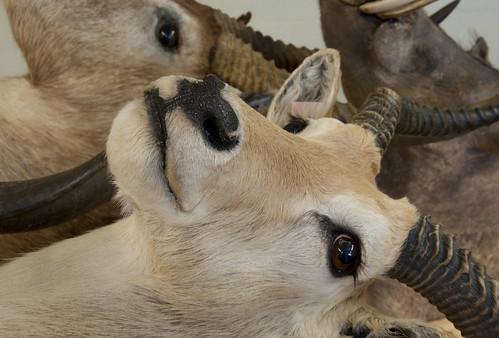 Mammal Division IV