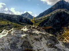 Serra de Tramuntana con Mantis (perspective-OL) Tags: españa nature landscape spain europe bonita mallorca isla spanien 2010 gottesanbeterin