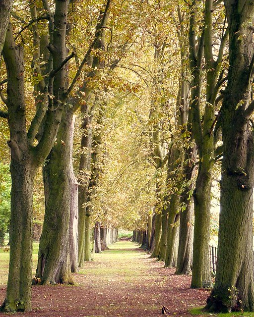 September in Hertford ~ country tree lined lane