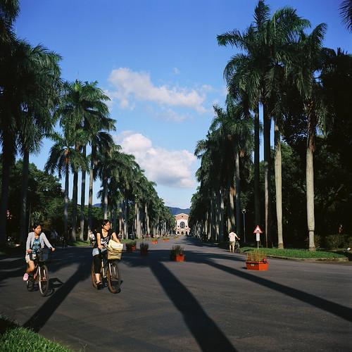 椰林大道 - National Taiwan University.