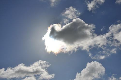 A Sunny Cloud