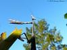 Praying Mantis (Image Hunter 1) Tags: macro nature closeup mantis louisiana praying banana bayou swamp marsh prayingmantis bayoucourtableau panasonicfz35