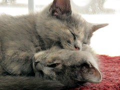 together (frankieleon) Tags: sleeping cats pets animals interestingness interesting kitten bestof nap kittens cc together creativecommons sharing rest popular frankieleon