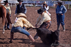 Pryor Oklahoma-22 (RetiredTraveler) Tags: ranch oklahoma womens kansas rodeo trailer calf branding burden newton hutchinson association tiedown loading sorting pryor doctoring retiredtraveler trailerloading womensranchrodeoassociation