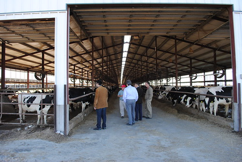 Answering questions about dairy cows and feed source