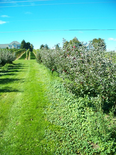 orchard in the front yard