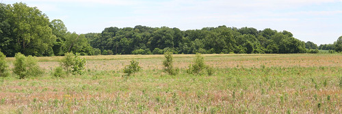 Floodplain easement in Greene County.