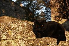 Droit dans les yeux. (ImAges ImprObables) Tags: chat vert yeux drme rhnealpes autichamp
