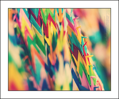 japan paper children photography photo memorial colours foto fotografie wwii hiroshima cc photograph creativecommons nippon af peacepark papercranes flickrphoto sadakosasaki flickrimage cranebird coloursofpeace flickrphotography afphotography vincentvanderpas archetypefotografie