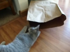Gracie and Millie Video 3 (edgarandron - Busy!) Tags: cats cute cat kitten gracie tabby kitty kittens kitties tabbies millie graytabby patchedtabby