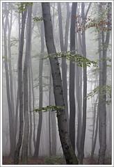 Foggy morning (ekropka) Tags: autumn light tree green leaves lines misty fog forest branches poland kraków krakoff canon40d vanagram updatecollection ucreleased ekropka