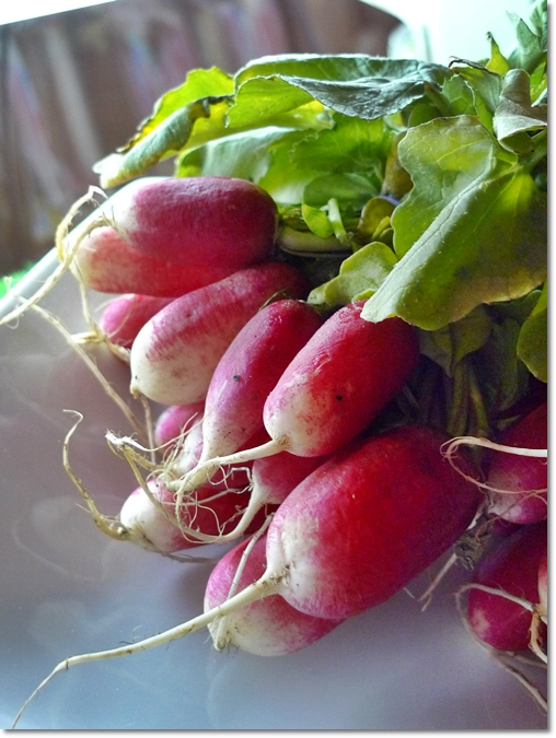 Heirloom Radish