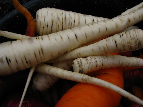 Parsnip by wburris, on Flickr