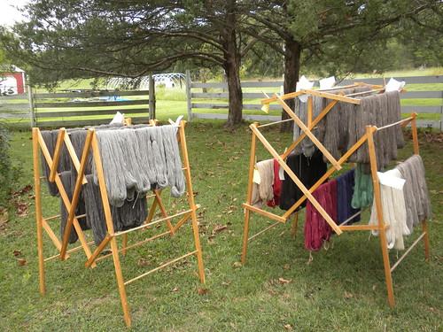 Llama drying in the Oklahoma wind