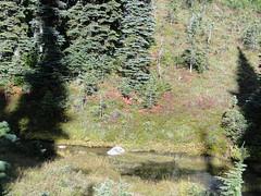 Fall near Eunice Lake.