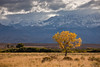 Lone Cottonwood (Jeffrey Sullivan) Tags: california usa yellow canon eos october fallcolors cottonwood sierranevada bishop 2010 easternsierra jeffsullivan 5dmarkii mountainhighworkshops sullivanworkshop