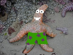 patrick the seastar