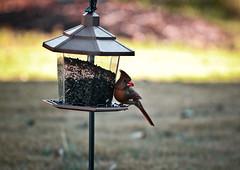 Bird Feeder (mjkjr) Tags: atlanta