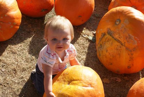 Rest assured, we've got the BEST pumpkin!