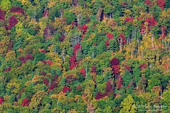 A patchwork of fall colors in Shenandoah National Park (John Baggaley) Tags: nature forest landscape outdoors virginia landscapes nikon day outdoor oldragmountain shenandoahnationalpark d90 afsvrzoomnikkor70300mmf4556gifed photocontesttnc11