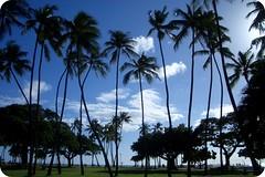 honeymoon (part I) (fi0na) Tags: blue sky panorama usa cloud sun holiday verde green alberi clouds landscape hawaii soleil october honeymoon nuvole nuvola oahu blu vert bleu ciel cielo honolulu sole albero palma azzurro palme vacanza paesaggio vacanze azur 2010 lightblue ottobre viaggiodinozze statiunitidamerica