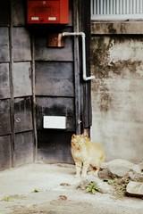 sunday walk for cats (+akane+) Tags: digital zeiss cat olympus picnik planar ep1 1485mm
