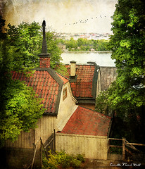 Rooftops (Milla's Place) Tags: trees roof buildings view rooftops sweden stockholm södermalm textures ghostbones memoriesbook skeletalmess magicunicornverybest selectbestfavorites selectbestexcellence magicunicornmasterpiece sbfmasterpiece selectbestfrontpagephoto