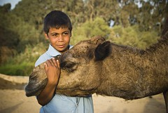 A boy and his camel, Bahariya Oasis, Egypt (Marco Boekestijn) Tags: life street trip travel houses people holiday tourism netherlands photography nikon desert muslim egypt culture dry delft tourist daily nile oasis western marco dust bahariya d80 boekestijn bahariyah