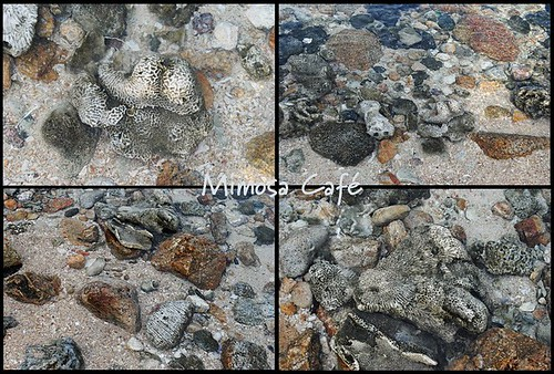 stonepattern