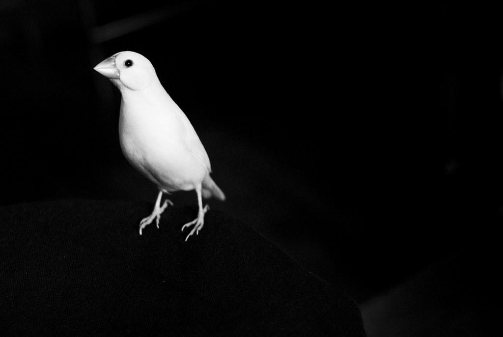 birdcafe03