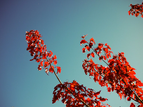 Red, Red Leaves // Salt Lake City, 2010