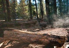 Steaming Log