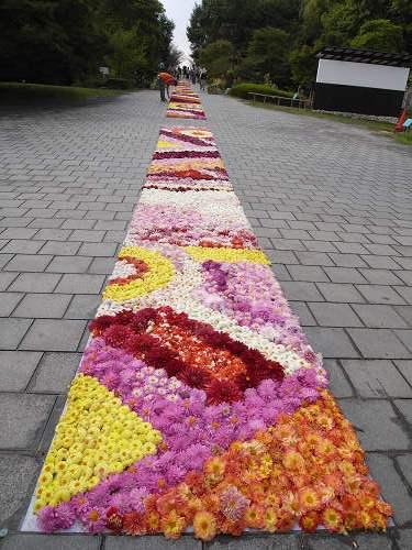やまと花ごよみ2010@馬見丘陵公園-08