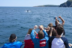 Whale Tail Spotted on a Boat Tour (Newfoundland and Labrador Tourism) Tags: tourism newfoundland labrador link whale coastline newfoundlandandlabrador newfoundlandandlabradortourism