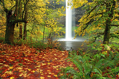 Dream Pool (Ian Sane) Tags: park autumn trees red green fall nature colors pool leaves rain yellow oregon silver landscape ian photography moss state south dream canyon falls sane