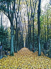 (the walking disaster) Tags: autumn trees friedhof berlin graveyard cemetary herbst jewish bume allee iphone jdischerfriedhof treesdiestandingup iphoneography