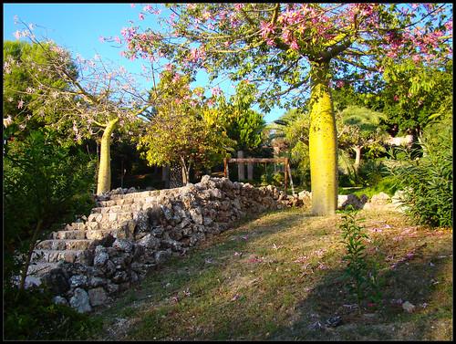 Parque de los Árboles (2)