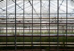 Sweaty (nokkie1) Tags: light holland lines dark warm greenhouse sweat humid nieuwveen