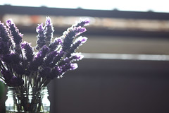 Follow the voice of your heart, even if it leads you off the path of timid souls (jewelflyt) Tags: light macro bokeh quote lavender windowsill afternooon hpps wilhelmreich perfectpurplesaturday