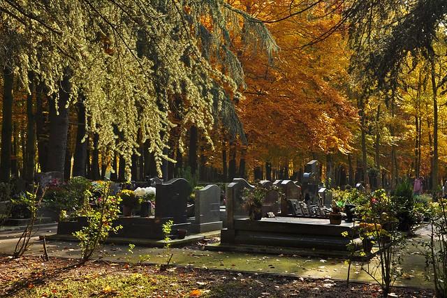 Automne au cimetière paysager de Clamart (6870)