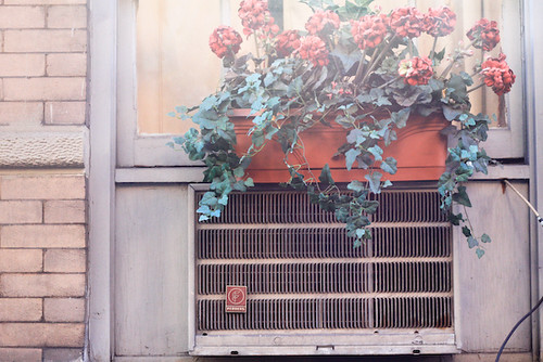 flowers on air conditioner (1 of 1)