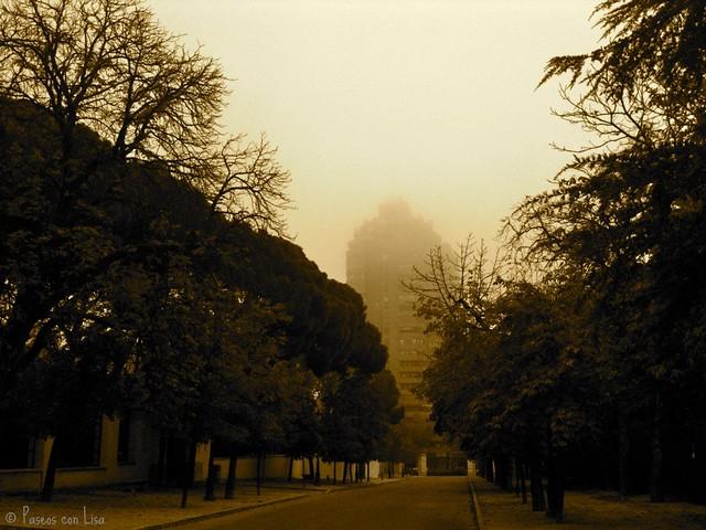 (212) Niebla matinal