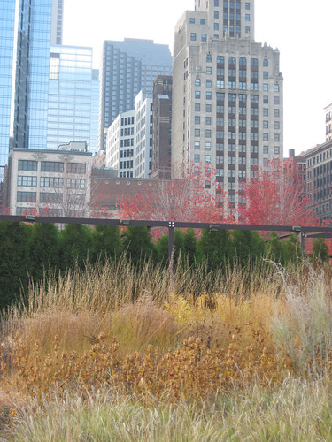 Millennium Park, Chicago. Fall 2010-14
