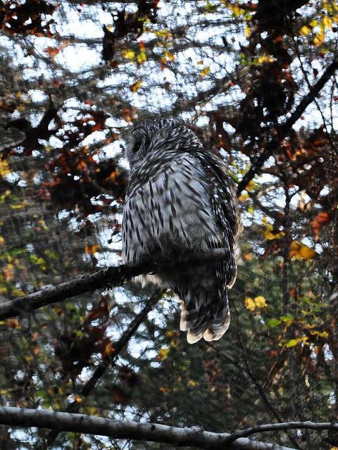 woodland zoo, Seattle