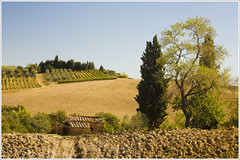 Italy Sept-Oct 2010. Tuscany Val D'Orcia. 9932. (Tiina Gill (busy)) Tags: italy building tree landscape tuscany valdorcia supershot mywinners platinumphoto flickrdiamond goldstaraward vanagram
