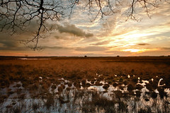 Heathlands (Mighty Maik) Tags: sunset holland netherlands dutch landscape heide landschap keizer maik nederlandse