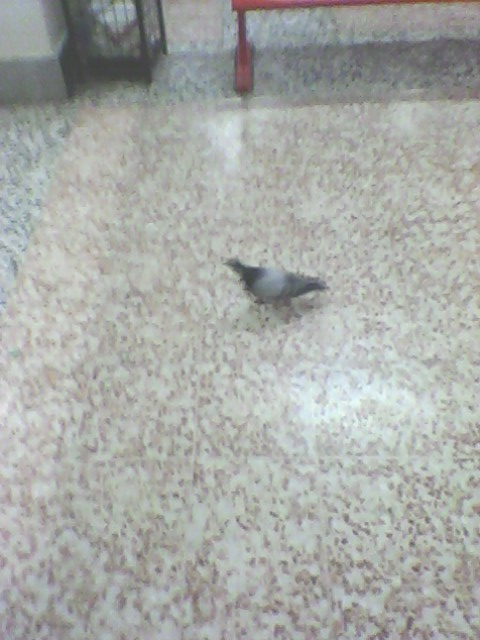 no pigeons