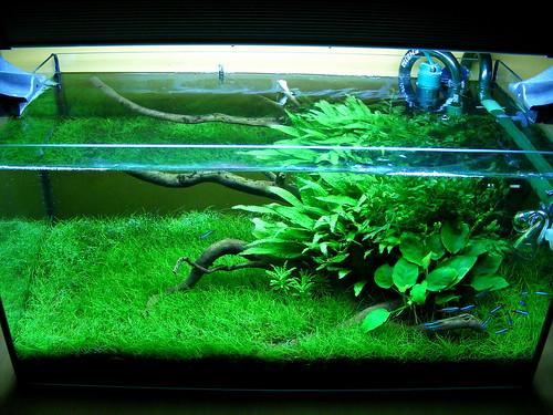 Ramen 54 literes akváriuma