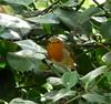The Stare. (Church Mouse 07) Tags: uk november autumn bird nature lumix wildlife panasonic british 2010 atthepark wildbird dmcfz28 churchmouse07 badtemperedrobin